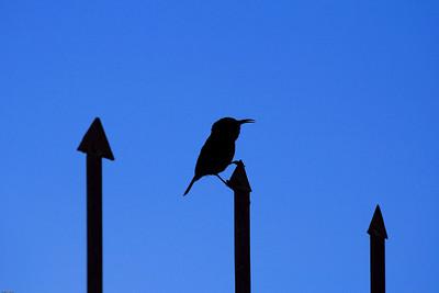 Bird on a Fence, Butare, Rwanda, 2007
