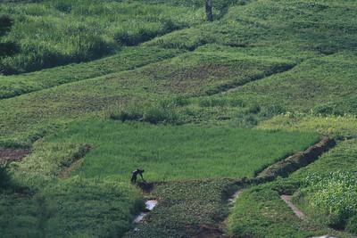 Farmer in Field, Butare, Rwanda, 2007