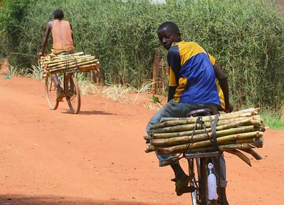 Sugar Cane Transport, Near Kigali, Rwanda, 2007