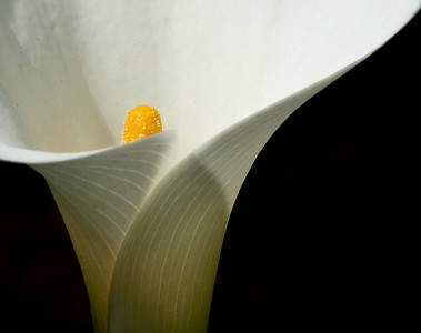 Flower in Garden, Butare, Rwanda, Africa