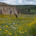 Old Building and Wildflowers