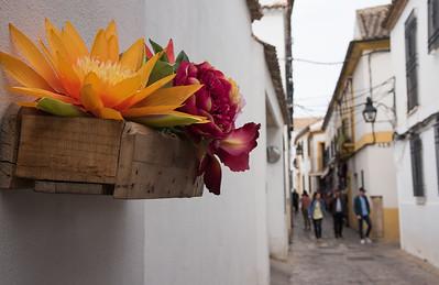 Alleyway Flowers