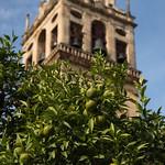 Mezquita Oranges