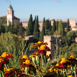 Flowers at the Alhambra