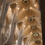 Celing of the Sagrada Familia Cathedral