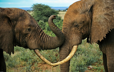 Elephants, Lake Manyara National Park, Tanzania, 2007