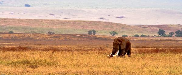 Elephant, Ngoro Ngoro Crater, Tanzania, 2007