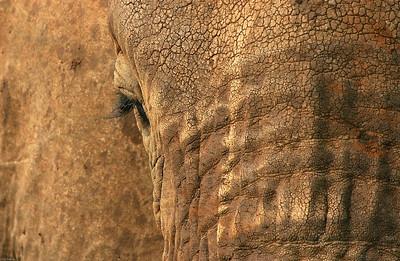 Elephant, Lake Manyara National Park, Tanzania, 2007