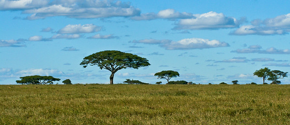 Central Serengeti, Tanzania, 2007
