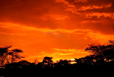 Sunset, Central Serengeti, Tanzania, 2007