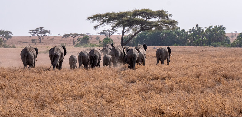 Heading for the Watering Hole