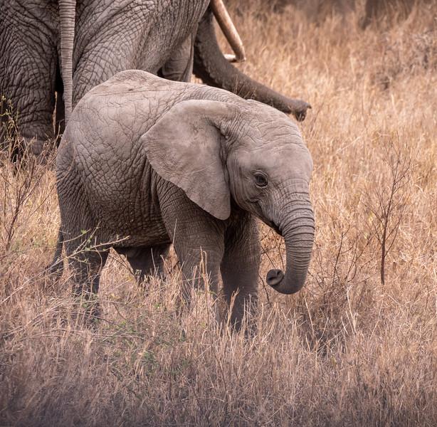 Dumbo's Twin