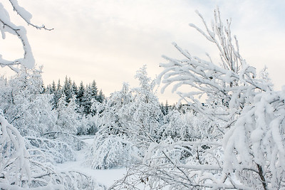 Deep snow covered forest in the winter