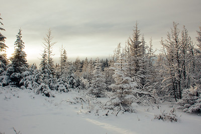 Winter wonderland - snow covered forest at sunset in the winter