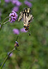botanicalGardens-4181