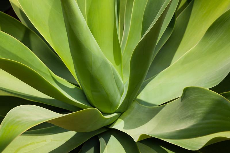 Succulent shapes