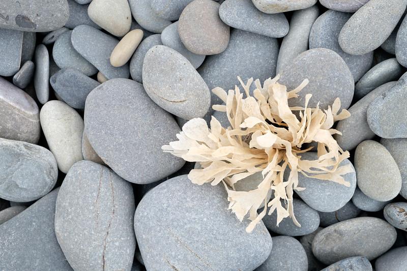 Pebbles and seaweed