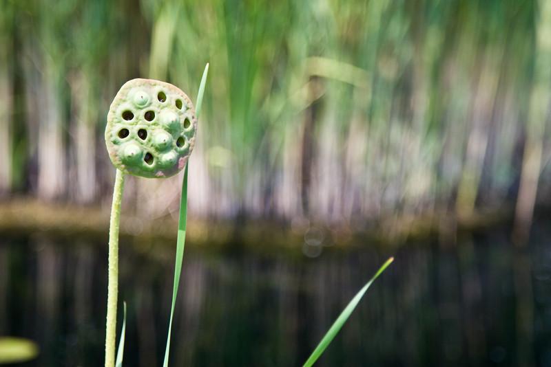 botanicalGardens-4279