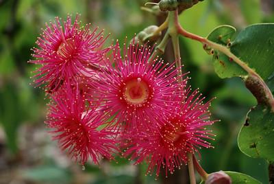 tropische Blüte