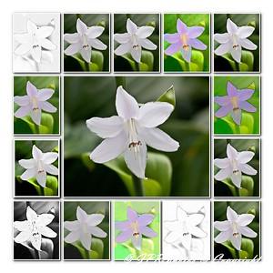 Collage of digital enhancements, original is center shot.