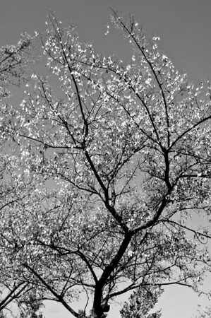 Radiant Tree Leaves