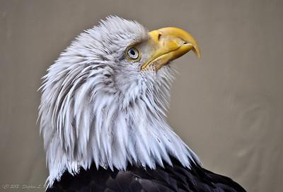 Bald Eagle Rescue Center