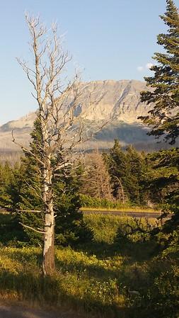 Curly Bear Mountain