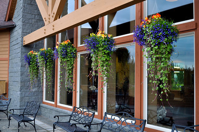 Potted Wildflowers at Talkeetna Alaskan Lodge