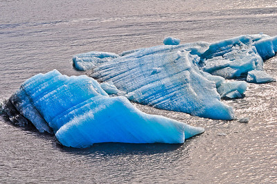 Calved Icebergs  from Hubbard Glacier