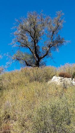 Oak Tree on the Hill