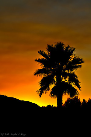 Palm Tree Silhouette Sunset