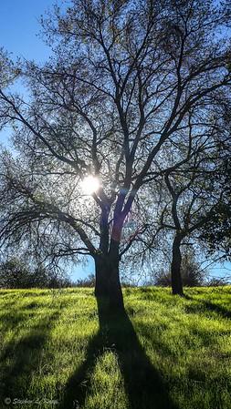 Tree Casting Show