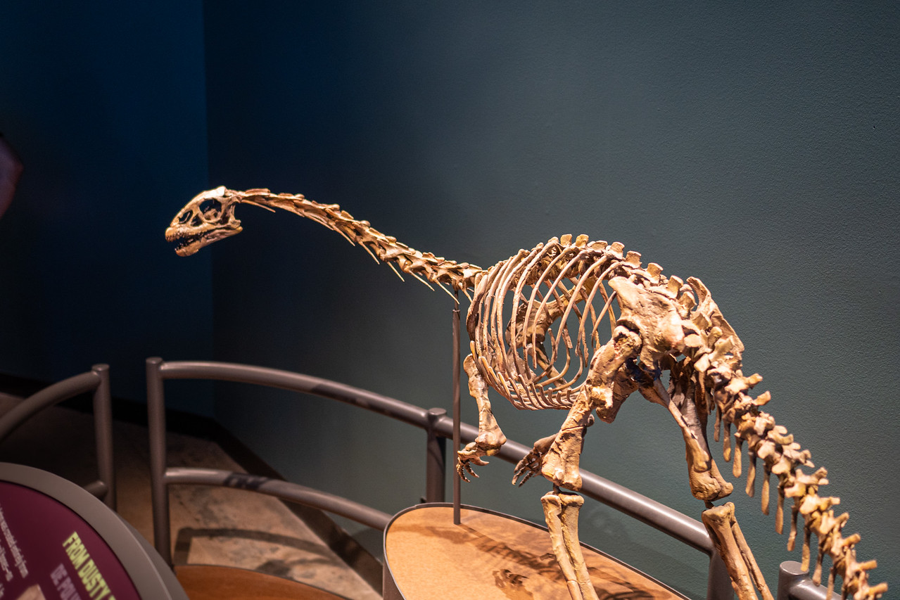 Sauropodomorph from Mt. Kirkpatrick, Antarctica