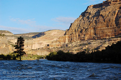Morning on the Yampa River, June 2008.