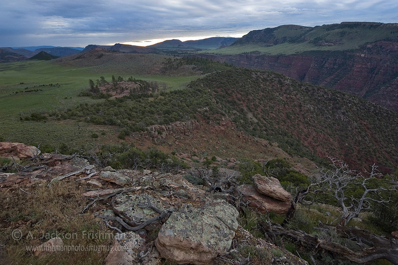 The high country above Lodore Canyon, Dinosaur National <br /> Monument, June 2010.