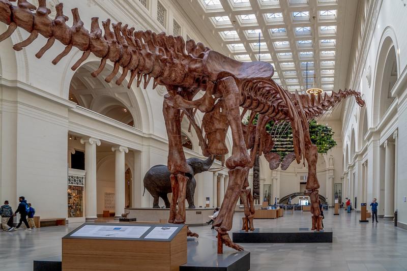 Maximo, the titanosaur is huge measuring 122 feet long and 28 feet tall