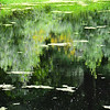 Guldregn genspejlinger på Sydfyn<br /> (Laburnum reflections in Denmark)