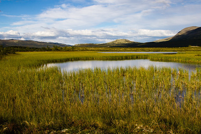 The marsh Fokstumyra, a nature reseve known for it's rich birdlife, in the Dovre Mountains