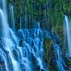 Hanging garden - McBurney Falls, Mt. Shasta, CA