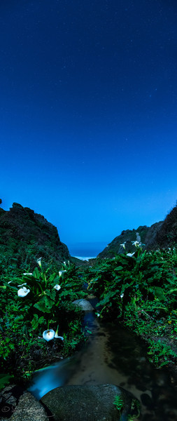 The lillies and the moon - Big Sur, CA