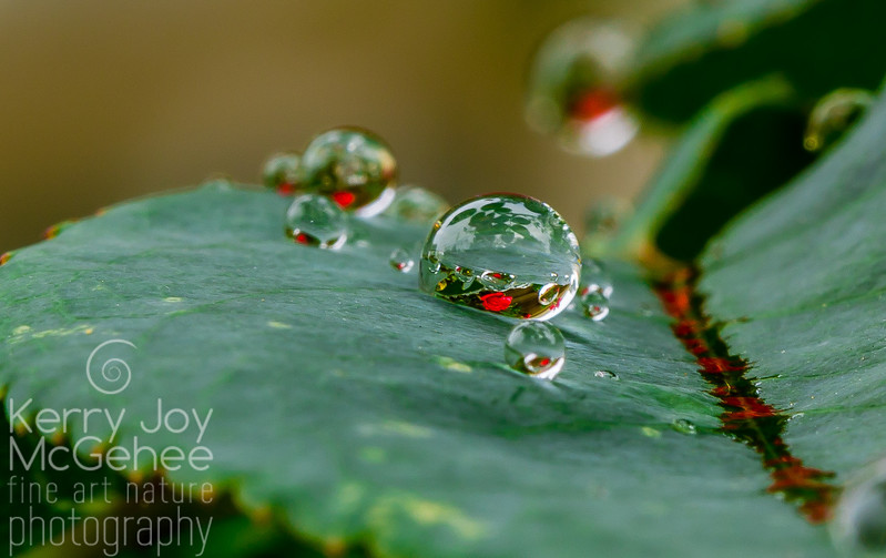 Altissimo Big Droplet