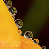 Freesia Droplets
