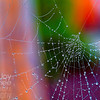Colorful Web