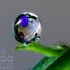 Morning Glory Droplet