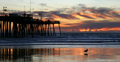 A seagull watches the sun set near the pier, Pismo Beach, CA.