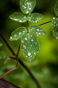 Water Drops 8