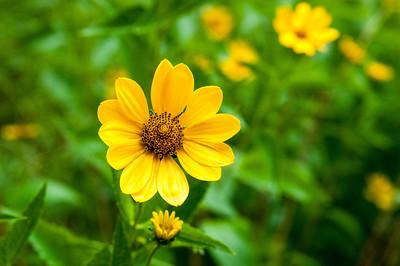 Yellow 27