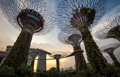 Marina Bay Gardens, Singapore