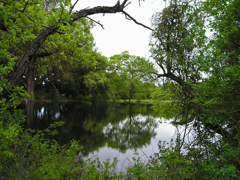 April 20: Pond at Picchetti Ranch