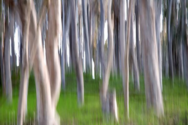 Forest Art 1